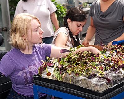 Image of students in a botany lab